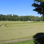 old marsh at Johnston's cranberry marsh in summer