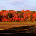 johnston's old marsh cranberry beds with fall trees in background