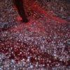 vat of fermenting blueberries