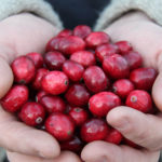 fresh cranberries in hands