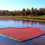 floating heart of cranberries in fall