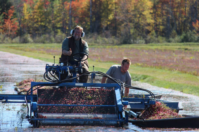 Ontario Cranberry Harvest is Underway!
