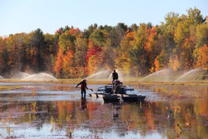 picking on a flooded cranberry bed in fall with sprinklers running