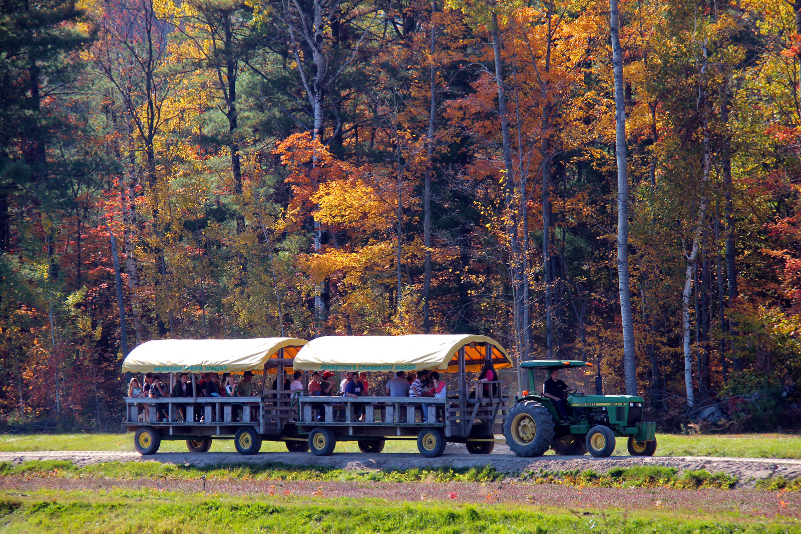tractor pulled wagon against fall trees