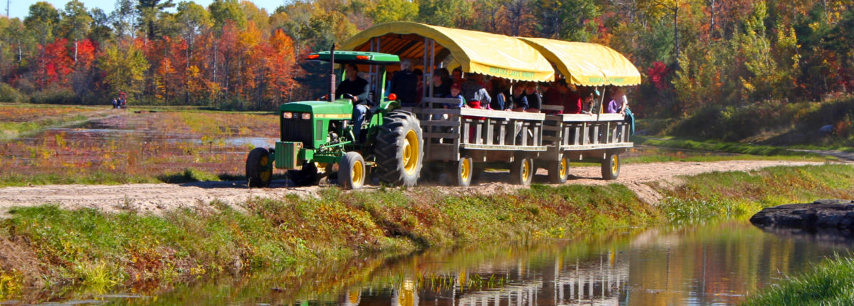 tractor pulled wagon at johnstons cranberry marsh