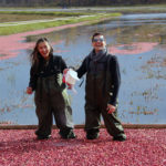 couple sprinkling sugar on flooded cranberries
