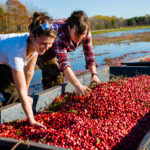 two girls touching freshly picked cranberries in a shallow boat