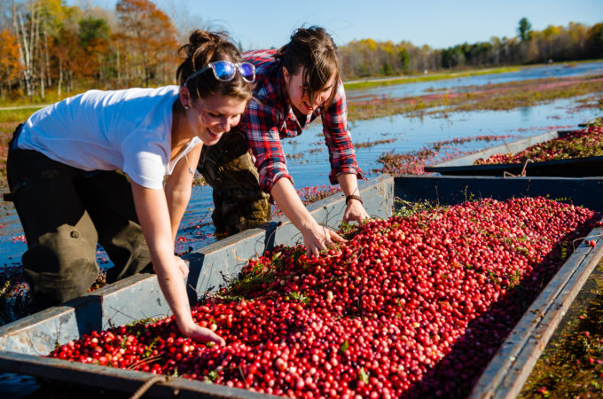 Visit Johnston's Cranberry Marsh & Muskoka Lakes Winery