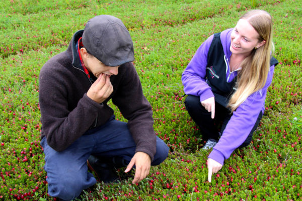 guide and visitor examining cranberries on a cranberry bed