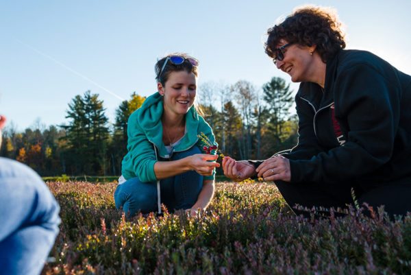 two women crouching on cranberry bed examining a cranberry vine