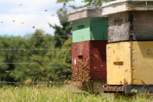 bees flying to and from their hives