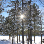 sun shining through snow covered pine trees