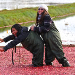 one smiling girl holding another laughing girl by the hipwaders preventing her from falling in floating cranberries