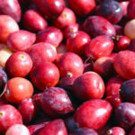 close up of fresh cranberries