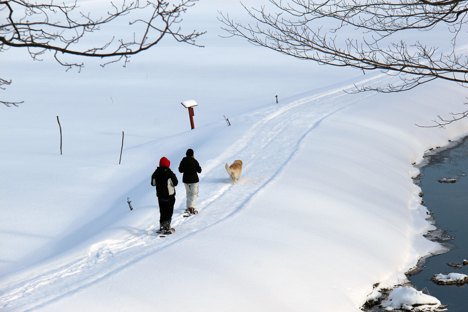 two girls and a dog snowshoeing on a trail beside a stream