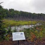 interpretive sign overlooking a wetland