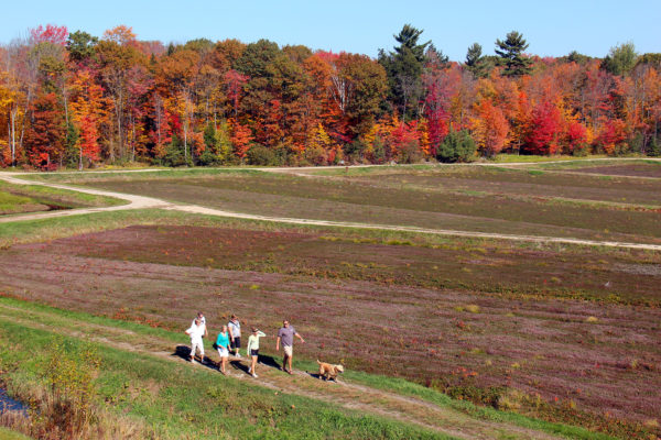 family with their dog hiking around johnston's old marsh with burgundy cranberry vines and fall trees in the background