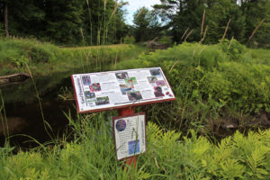 landstewardship trail sign against a background of bullrushes and a stream