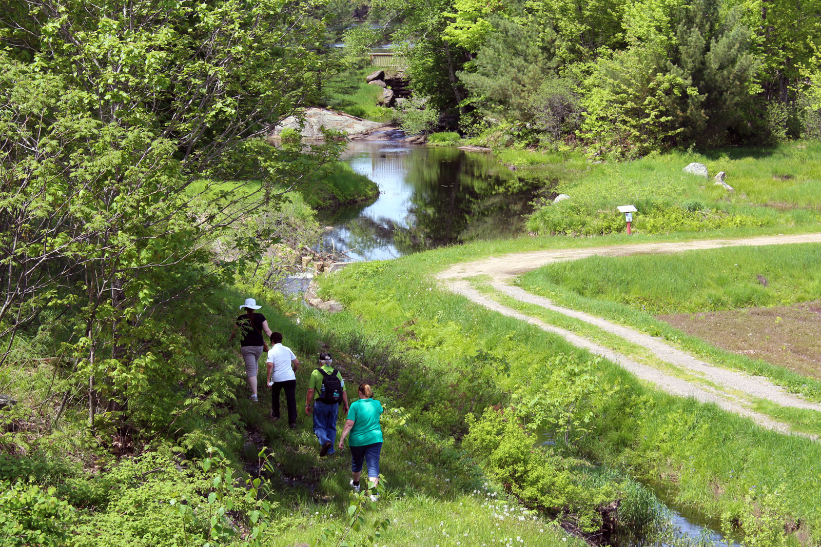 four people hiking beside a stream and cranberry marsh in the summer