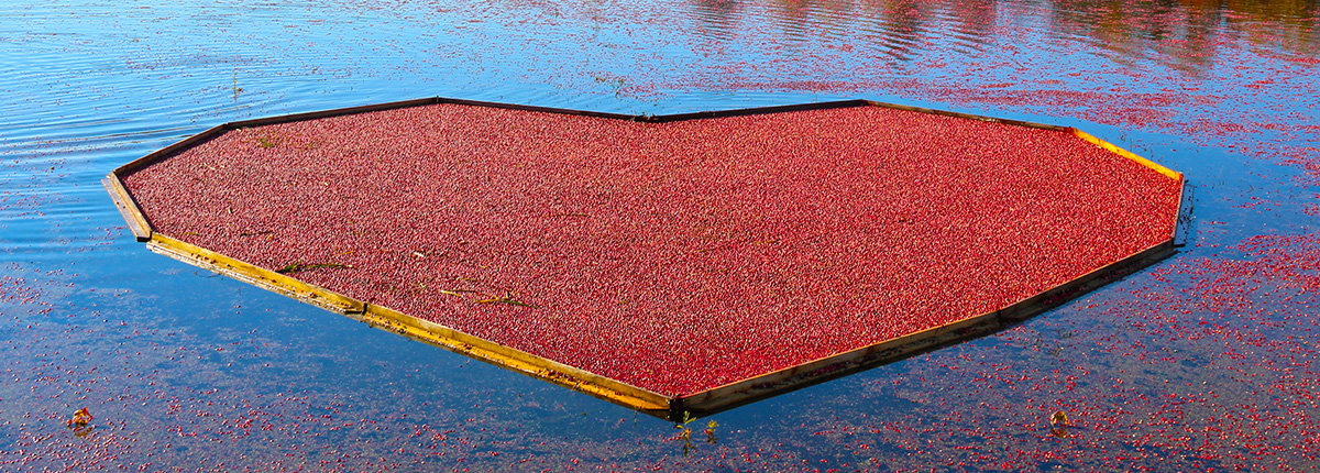 cranberries floating in a heart shape