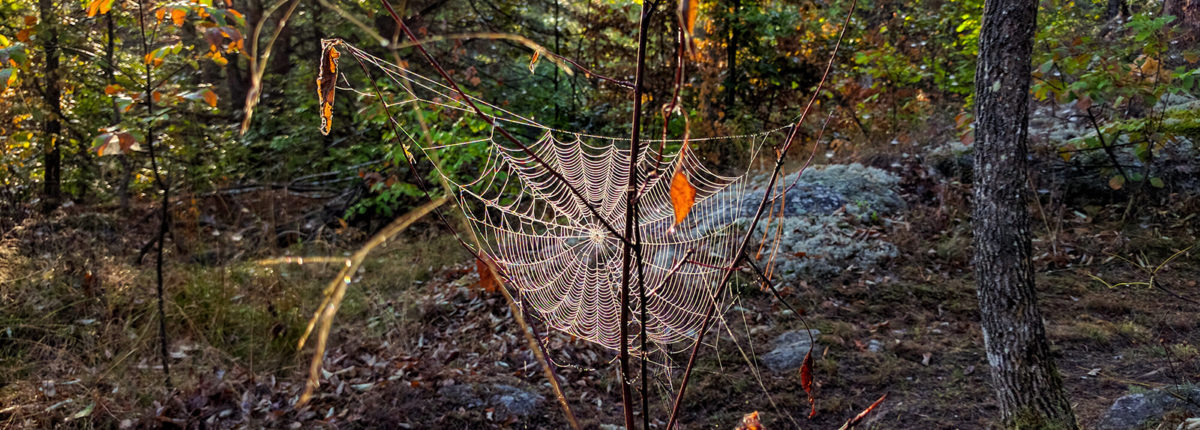 large spider web with sun shining on it