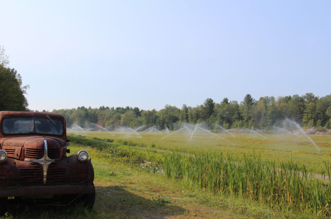 sprinklers running on a cranberry bed with an antique truck in the foreground