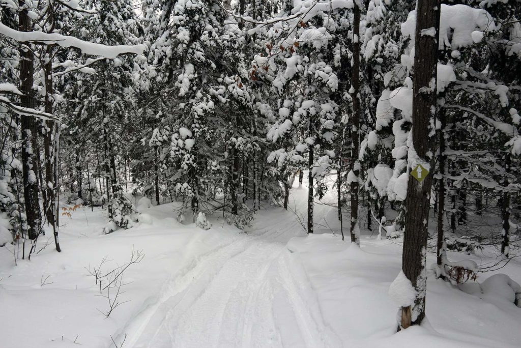 Snowshoe trail through snow covered pine trees at Johnston's Cranberry Marsh in Bala, Muskoka, Ontario