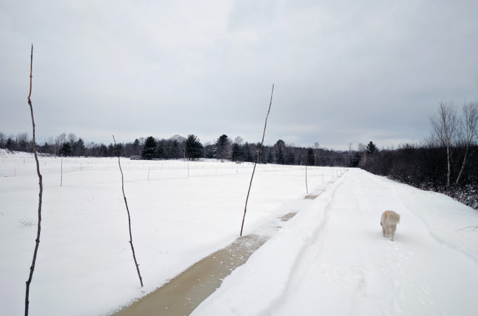 Stakes along ditch of east marsh bed at Johnston's Cranberry Marsh in Bala, Muskoka, Ontario