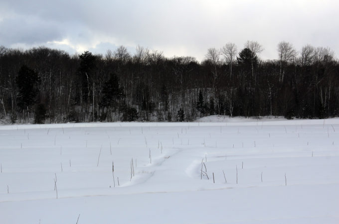 Old marsh in winter at Johnston's Cranberry Marsh in Bala, Muskoka, Ontario