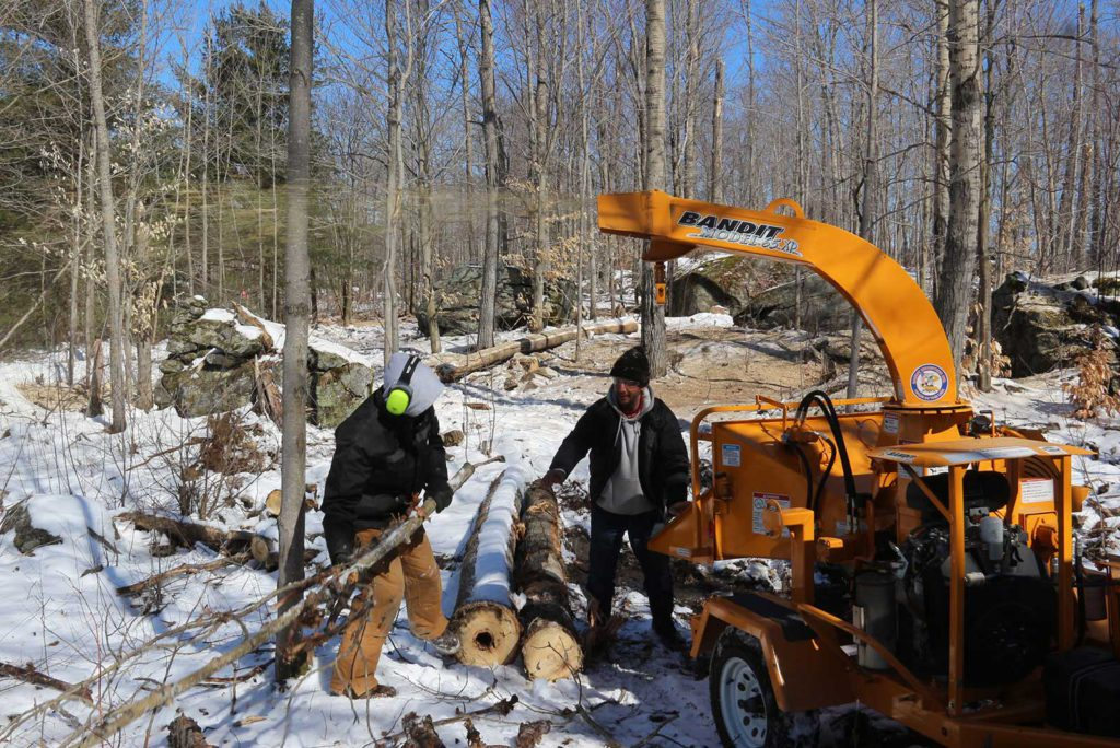 crew feeding branches into a wood chipper working on trails at Johnston's Cranberry Marsh in Bala, Muskoka, Ontario