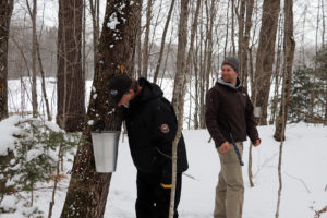 man peering into a sap bucket attached to a tree in woods in winter