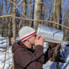 man drinking from a sap bucket in the woods