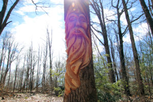 face carved into a tree