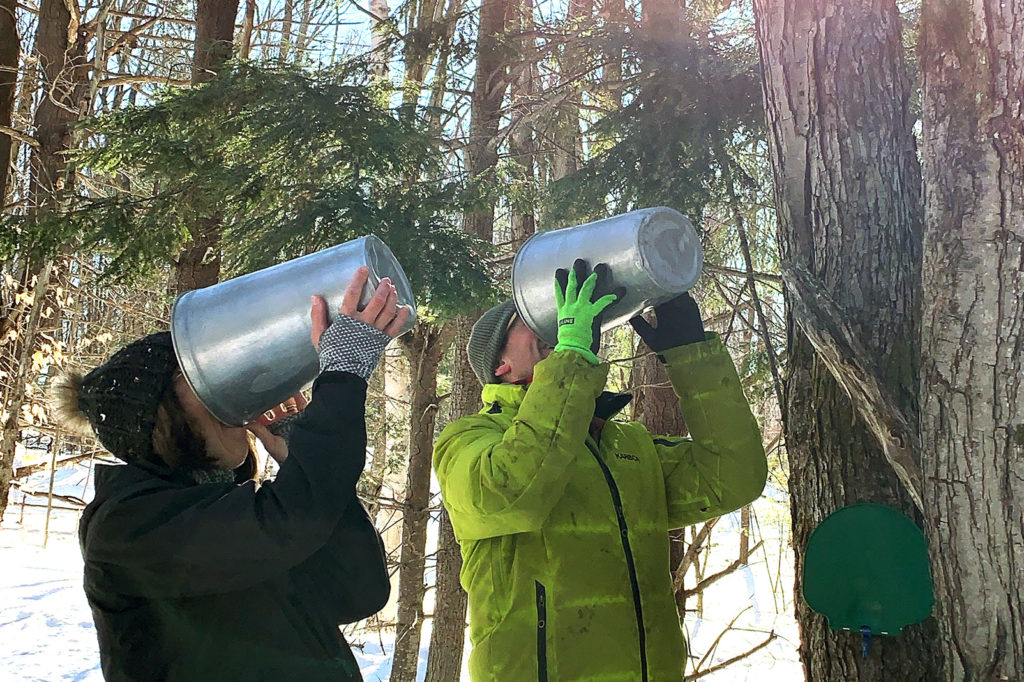 couple drinking sap from sap buckets
