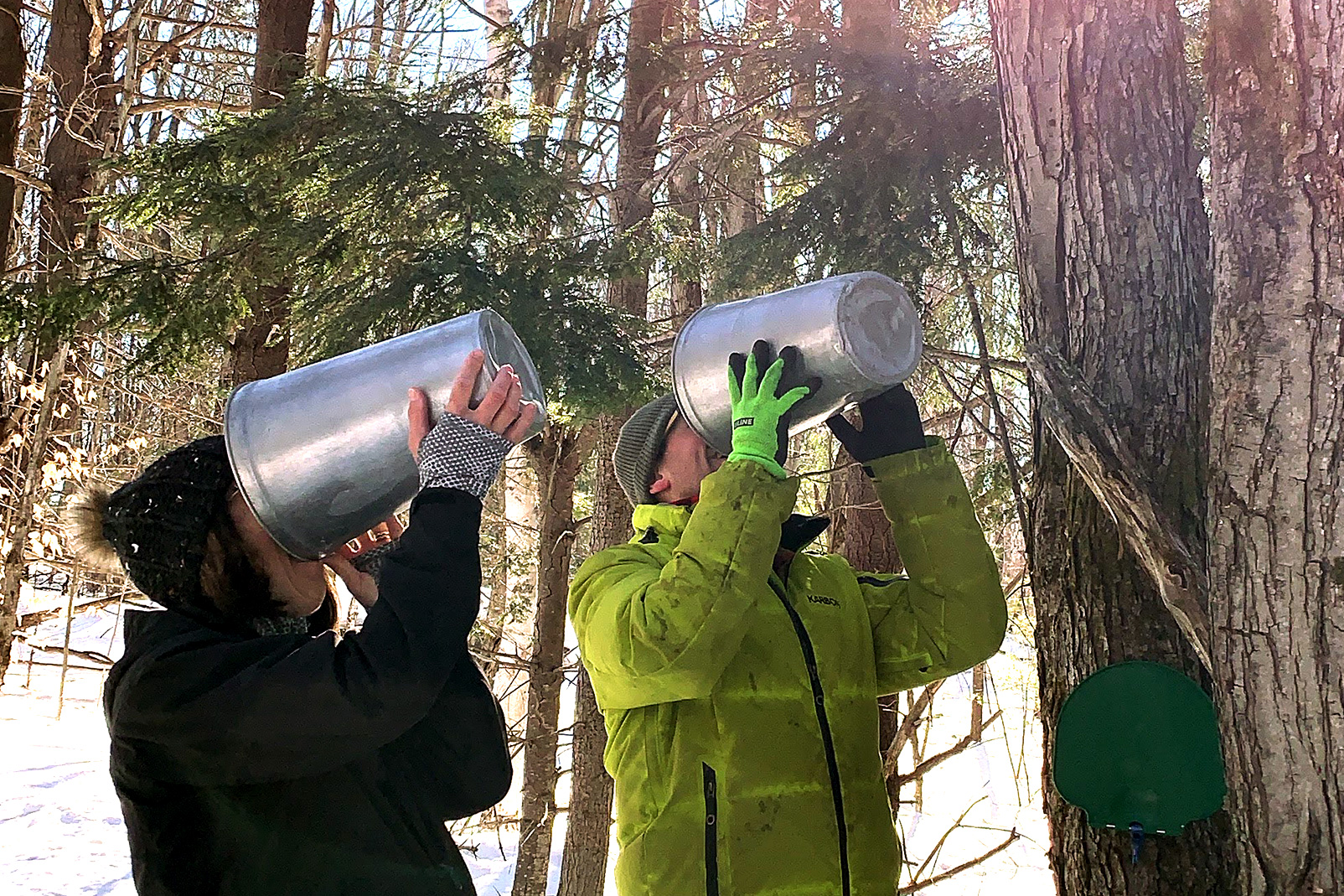 couple drinking sap from sap collection buckets