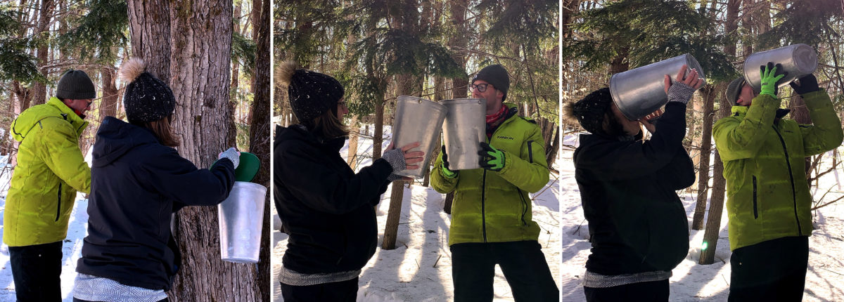 three photos showing couple drinking sap from buckets