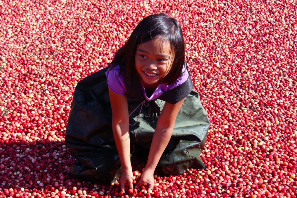 child wearing chest waders standing in cranberries