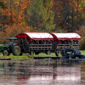 tractor pulled wagon tour with a cranberry picker in the foreground and fall trees in background