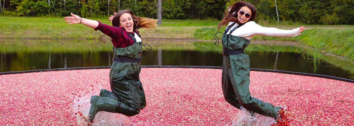 two women in waders jumping in a bog of floating cranberries